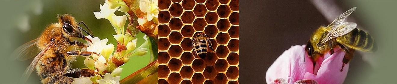 header bees