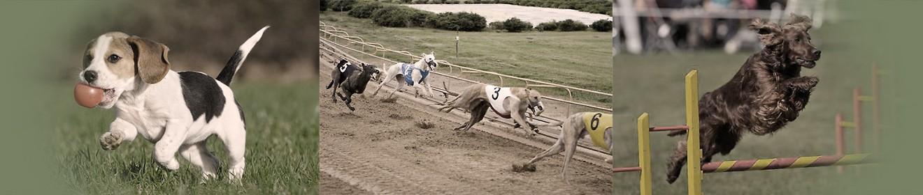 header dogs 01